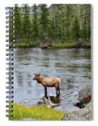 Elk Stag In The Madison River Of Yellowstone National Park Spiral Notebook