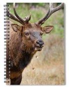 Elk Staring Spiral Notebook