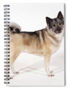 Elkhound Dog Spiral Notebook