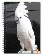 Elvis The Cockatoo Spiral Notebook
