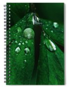 Emerald Rain Spiral Notebook