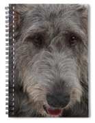 Irish Wolfhound IIi Spiral Notebook