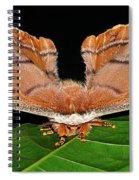 Emperor Gum Moth - 6 Inch Wing Span Spiral Notebook
