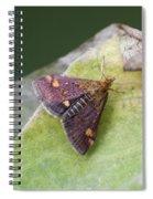 Emperor Moth Spiral Notebook