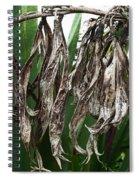 Empty Shells Spiral Notebook