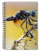Enchanting Dragonfly Spiral Notebook