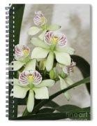 Encyclia Radiata Spiral Notebook