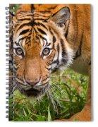 Endangered Species Sumatran Tiger Spiral Notebook