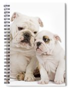 English Bulldog, Adult And Puppy Spiral Notebook