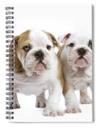 English Bulldog Puppies Spiral Notebook