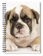 English Bulldog Puppy Spiral Notebook