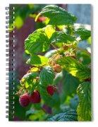 English Raspberries Spiral Notebook