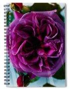 English Rose - Purple Rose - Fragrant Rose Spiral Notebook