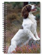English Springer Spaniel Dog Spiral Notebook