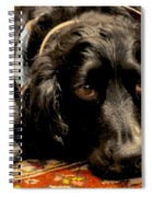 English Cocker Spaniel Spiral Notebook