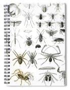 Entomology Myriapoda And Arachnida  Spiral Notebook