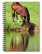 Equine Reflections Spiral Notebook