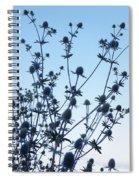 Eryngium Explosion Spiral Notebook