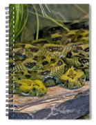Ethiopian Mountain Vipers Spiral Notebook