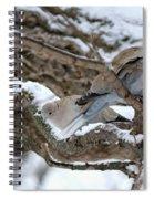 Eurasian  Collard Doves Spiral Notebook