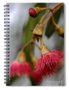 Eucalyptus Flower Spiral Notebook