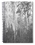 Eucalyptus Forest Spiral Notebook