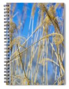 Eulalia Grass Native To East Asia Spiral Notebook
