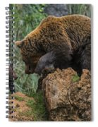 Eurasian Brown Bear 13 Spiral Notebook