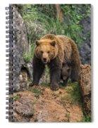 Eurasian Brown Bear 14 Spiral Notebook