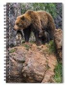 Eurasian Brown Bear 15 Spiral Notebook