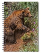 Eurasian Brown Bear 21 Spiral Notebook