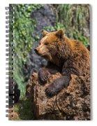 Eurasian Brown Bear 8 Spiral Notebook