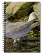 Eurasian Collared Dove Spiral Notebook