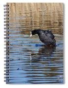 Eurasian Coot Spiral Notebook