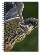Eurasian Hobby 2 Spiral Notebook