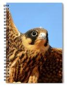 Eurasian Hobby Falco Subbuteo In Spiral Notebook
