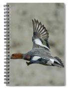 Eurasian Wigeon Flying Spiral Notebook