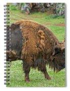 European Bison 4 Spiral Notebook