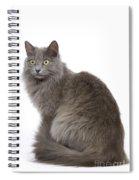 European Blue Cat Spiral Notebook