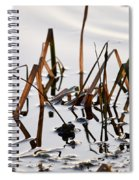 European Common Brown Frog Spiral Notebook