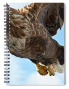 European Flying Sea Eagle 2 Spiral Notebook