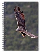 European Flying Sea Eagle 4 Spiral Notebook