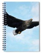 European Flying Sea Eagle 7 Spiral Notebook