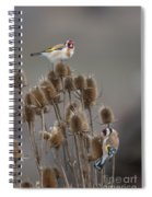 European Goldfinch Spiral Notebook