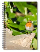 European Robin Spiral Notebook
