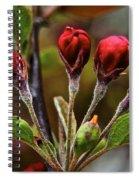 Evening Beauty Spiral Notebook