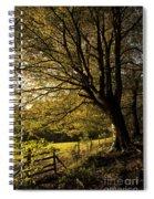 Evening Beech Spiral Notebook