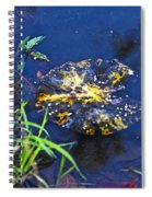 Evening Encloses The Aging Lily Pad Spiral Notebook