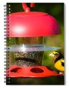 Evening Grosbeak Spiral Notebook