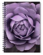 Evening Lavender Rose Flower Spiral Notebook